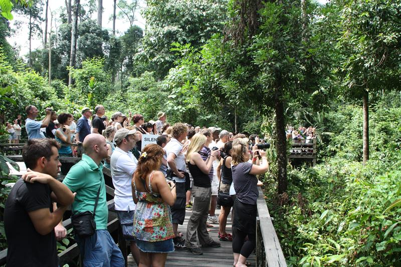 Crowds at Sepilok Orangutan Rehabilition Centre