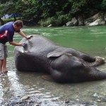 Wash an elephant in Sumatra Indonesia