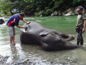 Washing elephants at the river Tangkahan