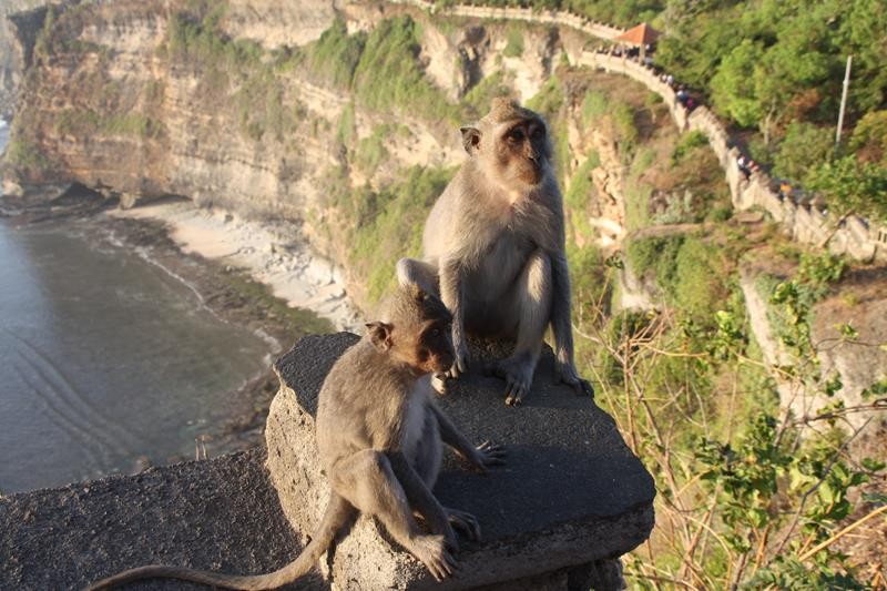 Monkeys at Uluwatu temple Bali