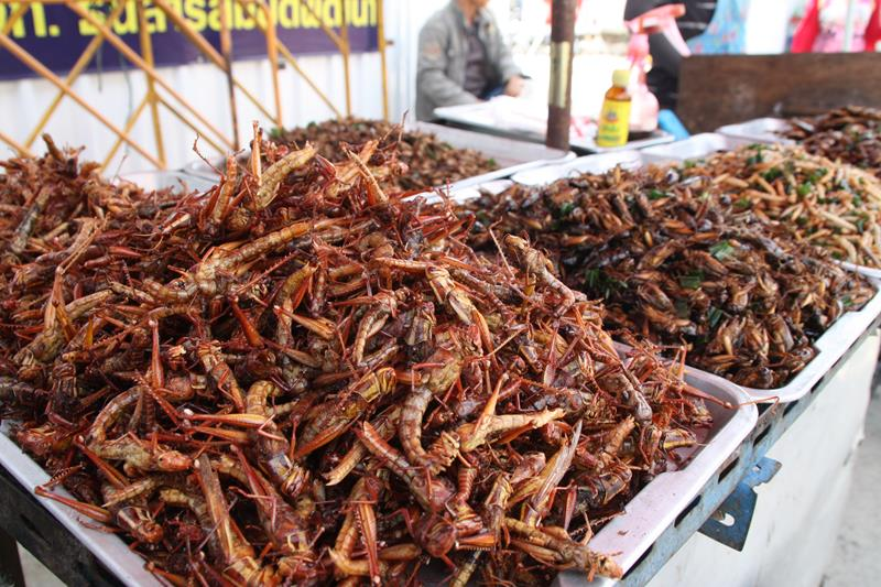 Insects for eating at Chatuchak markets Bangkok