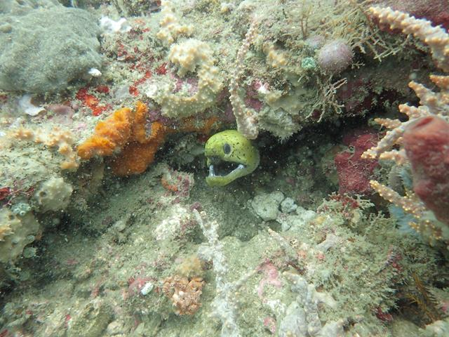 Moray eel West Lombok