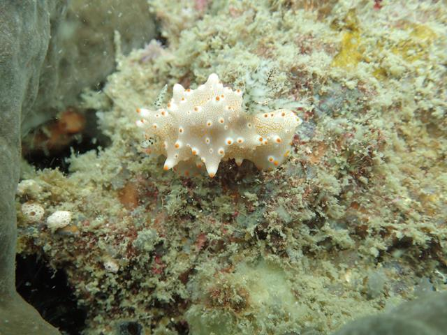 Nudibranch at Secret Garden Lombok