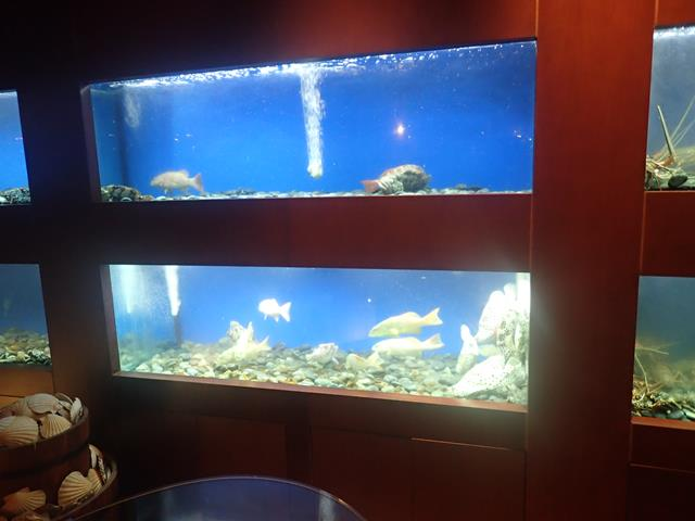 Fresh seafood tanks at C's Seafood Restaurant