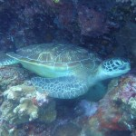 Scuba Diving Bunaken National Marine Park Indonesia