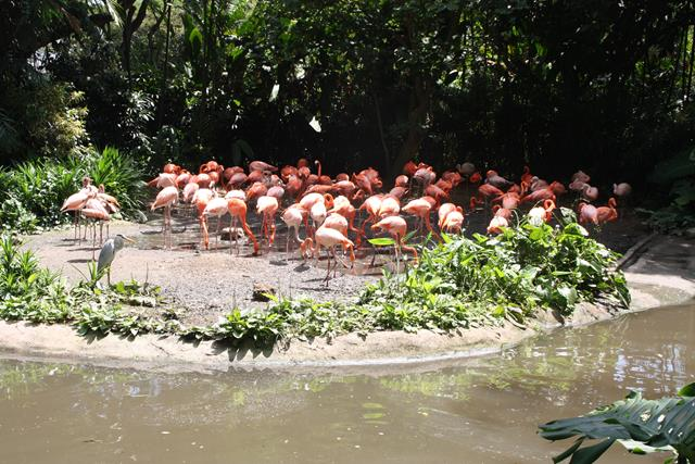 Flamingo Lake at Jurong Bird Park