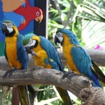 Macaw birds at Jurong Bird Park