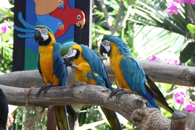 Jurong Bird Park Singapore - Where Colour Lives