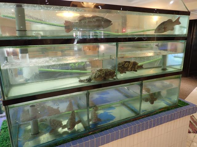 Fresh seafood tanks at Dragon Court Chinese Restaurant