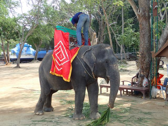 Elephant rides at the Sanctuary of Truth