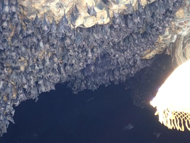 The bats inside the Bat Cave Bali