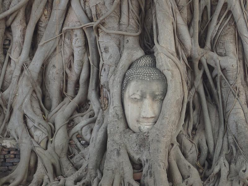 Buddha Head in Tree Roots Ayutthaya