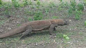 Day trips to Komodo National Park