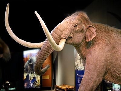 Mammoths Exhibition at Australian Museum