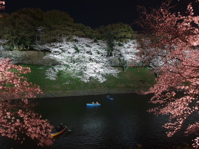 Cherry Blossom viewing close to Yasukuni Shrine