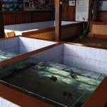 Turtle Conservation at Sanur Bali