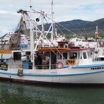 Fresh Seafood at Cairns Marina