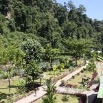 Jungle Trekking in Indonesia