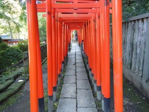 Line of Torii gates at Nezu Shrine Tokyo