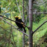 Gold Coast Lamington National Park