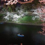 Sakura Cherry Blossoms at night in Tokyo