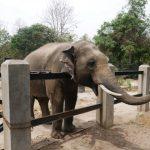 Phnom Tamao Zoo Park